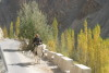 Ladakh_Oct_2008_076.jpg